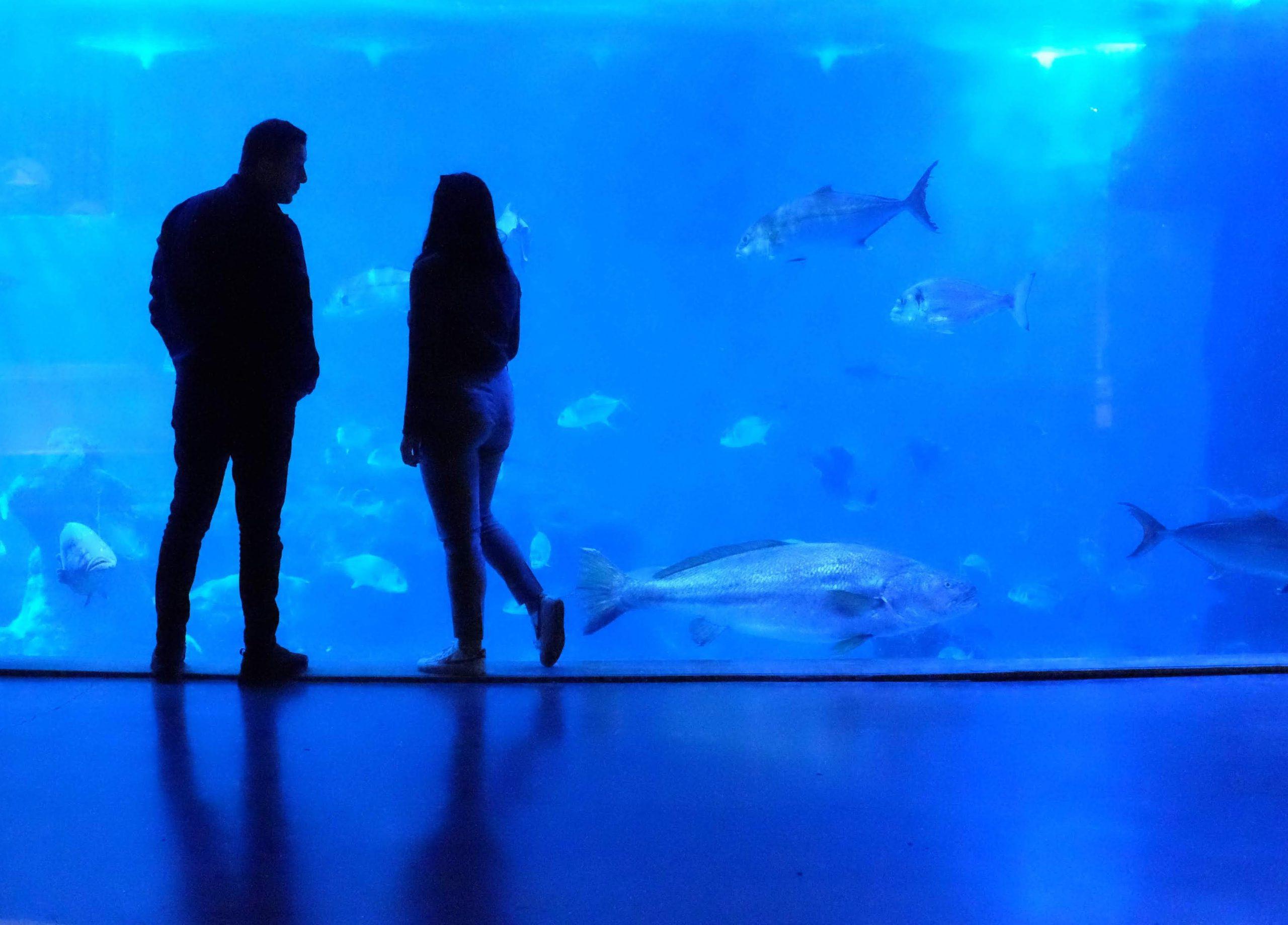 PM3:30 京都水族館でデートを満喫